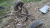 Doi morţi şi o căruţă sfărâmată din cauza unui tânăr de 25 de ani VIDEO