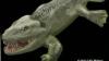 Cum mergeau primii amfibieni tereştri