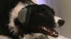 Ce cred câinii despre noi? EXPERIMENTUL INEDIT care arată ce este în mintea patrupezilor VIDEO
