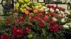 Expoziţia Chelsea Flower Show din Londra, la cea de-a 99 ediţie