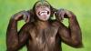 Motivul pentru care nu trebuie să le dai de mâncare maimuțelor. Ce a pățit un bărbat (FOTO)