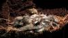 ŞOC! Pe o insulă din Atlantic au apărut şoareci uriaşi care ucid milioane de păsări