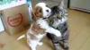 Pisica terorizată de un căţel prea jucăuş VIDEO