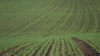 Preţul de vânzare a terenurilor agricole s-a micşorat