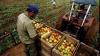 Banca Mondială: Agricultura din Moldova nu este eficientă