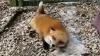 Cea mai fericită vulpiţă din lume VIDEO