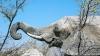 Elefantul Citta a prezis victoria Italiei în meciul din sferturi cu Anglia