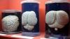 Cea mai mare colecţie de creiere din lume, deteriorată
