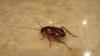Nu mai striviţi gândacii de bucătărie, s-ar putea crea haos pe Terra