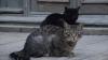 Bodyguarzi pentru operele de artă! Un muzeu din Rusia angajează pisici de pază