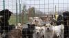 Scandal din cauza câinilor! Oamenii sunt deranjaţi de lătratul şi mirosul maidanezilor