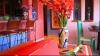 O lume plină de culoare şi de veselie: Cum să ne amenajăm casa în stil mexican FOTO