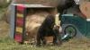 Aniversare cu mare fast la Grădina Zoologică din San Diego! Un pui de gorilă a împlinit un an