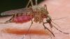Metode naturale de tratare a inflamaţiilor şi mâncărimilor provocate de înţepăturile de ţânţar