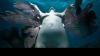 Lume de poveste sub ape: Sculpturile expuse pe fundul oceanului, finalizate de natură FOTO