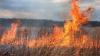 Ard lanurile! Aproape 20 de hectare de grâu au fost mistuite de flăcări