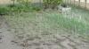 Peste 500 de hectare de teren agricol, distruse de grindină