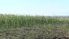 Invazie de omizi în ţară. Culturile agricole sunt în pericol