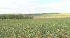 Culturile agricole din Donduşeni, făcute una cu pământul. Autorităţile strâng din umeri
