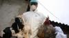 În Mexic a fost decretată stare de urgenţă, din cauza unei epidemii de gripă aviară