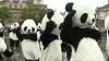 """Londra invadată de """"urşi panda"""" DETALII"""