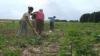 Începând cu anul viitor, producătorii agricoli ar putea achita un impozit unic
