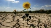 Avertisment ÎNGRIJORĂTOR de la ONU: Statele ar trebui să îşi facă stocuri de alimente