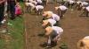 Record mondial. Peste 1.000 de agricultori din Taiwan au plantat două hectare de orez în mai puţin de 20 de minute