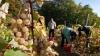 Ţăranii care vor produce peste o tonă de vin ar putea fi impozitaţi