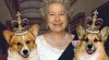 Unul dintre câinii din rasa corgi ai reginei Marii Britanii, a murit