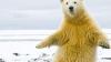 Hei, Macarena! Ursul care ar putea concura cu un dansator profesionist IMAGINI