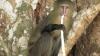După 28 de ani, a fost descoperită o nouă specie de maimuţe, neştiută lumii până acum