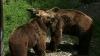 România: O persoană a murit, iar alte două au fost rănite după ce au fost atacate de urs