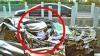 Poza care UIMEŞTE. Ce face şoferul din maşina strivită în urma accidentului