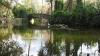 Iaz cu cea mai pură apă şi oază de verdeaţă la Grădina Zoologică din Capitală