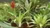 Pericol de ÎNGHEŢ la Grădina Botanică: Centrala de încălzire este defectă şi speciile rare ar putea muri