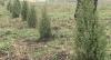 Un parc asemănător cu Grădina Botanică din Capitală, în satul Sărătenii Vechi
