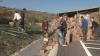 Un tir din Moldova a blocat un drum european. Era încărcat cu biscuţi şi s-a răsturnat