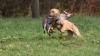 MOLDHUNTER 2017: În jur de 50 de câini de vânătoare din Moldova, Ucraina şi România au concurat în cadrul campionatului