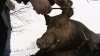 În Ajun de Crăciun se taie porcul: De ce godacul este călărit de copii şi se pârleşte anume cu paie VIDEO