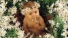 Zodiacul floral. Ce floare este copilul tău în funcţie de data naşterii