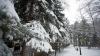 11 localităţi au rămas fără curent electric din cauza ninsorilor