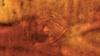 """Creatură bizară, depistată într-un cocon vechi de 200.000.000 de ani. """"A fost una din cele mai rapide vietăţi de pe Terra"""""""