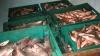 Contrabandă cu peste o tonă de peşte viu din regiunea transnistreană