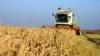 Agricultura a înregistrat un declin profund în 2012