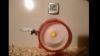 De râs sau de plâns? Invenţia care la sigur nu este recomandată de Protecţia Animalelor VIDEO