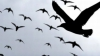 O posibilă epidemie în SUA: Zeci de păsări moarte, descoperite pe o autostradă