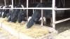 Fermierii NU şi-au primit în întregime subvenţiile promise de stat