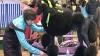 Parfumaţi şi coafaţi, circa 500 de câini au fost vedete la o expoziţie în Chişinău