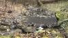 (VIDEO) Mizerie la Orheiul Vechi: Un râu din rezervaţia peisagistică Trebujeni a fost poluat